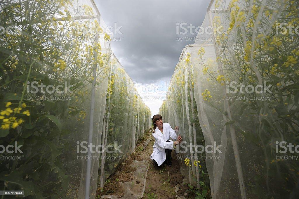 Scientific plant test area stock photo