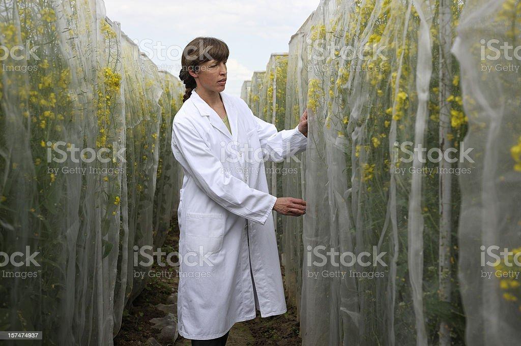 Scientific test area royalty-free stock photo