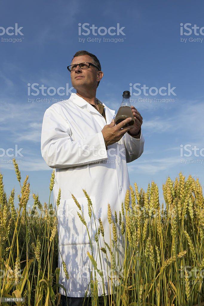 Scientist and Wheat royalty-free stock photo