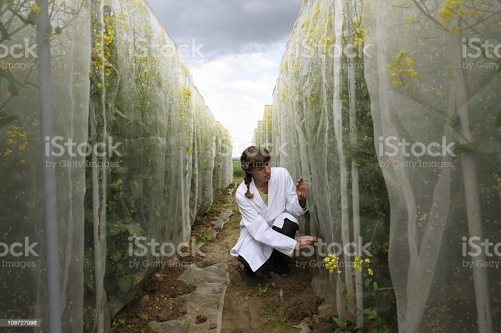 Scientist at outdoor work stock photo