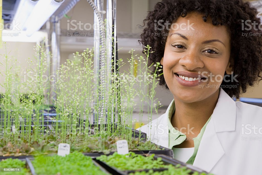 Scientist checking plant seedling growth in laboratory stock photo