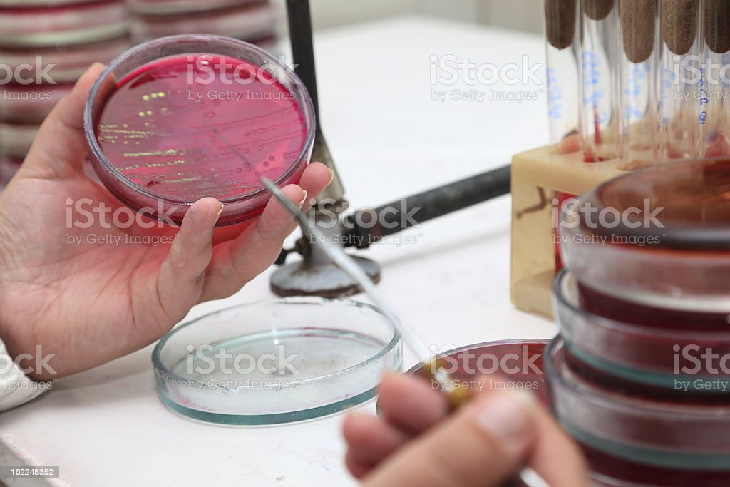 Scientist checks analyses in a petry dish royalty-free stock photo