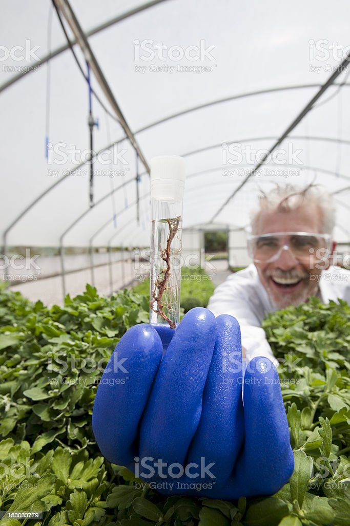 Scientist doing plant research royalty-free stock photo
