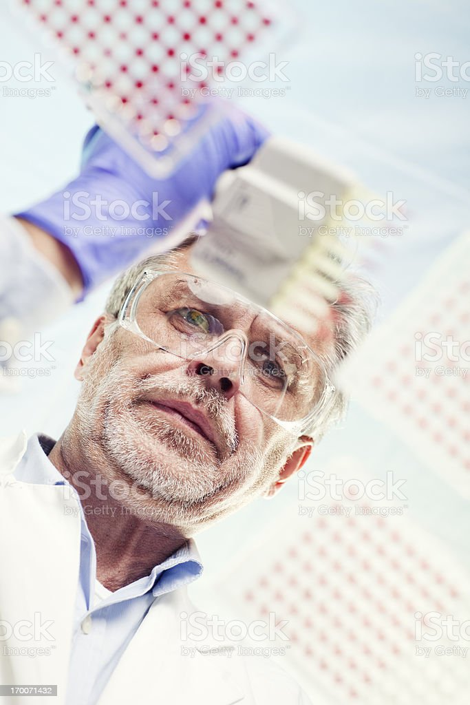 Scientist Examining and using multi channel pipette in lab experiment stock photo
