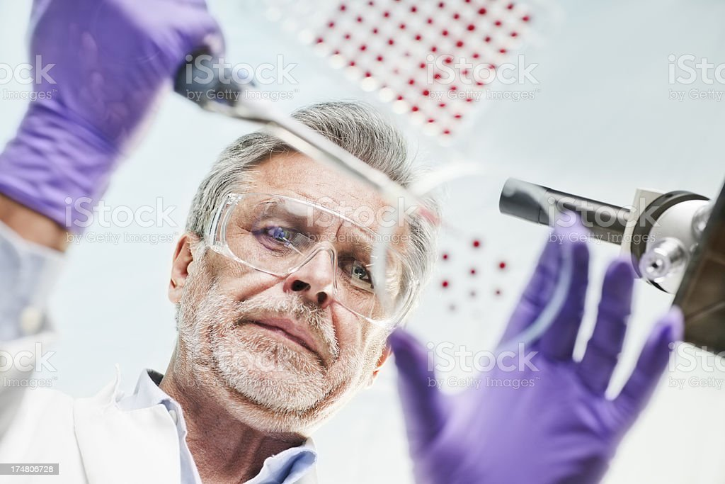 Scientist Examining and using pipette in lab experiment royalty-free stock photo