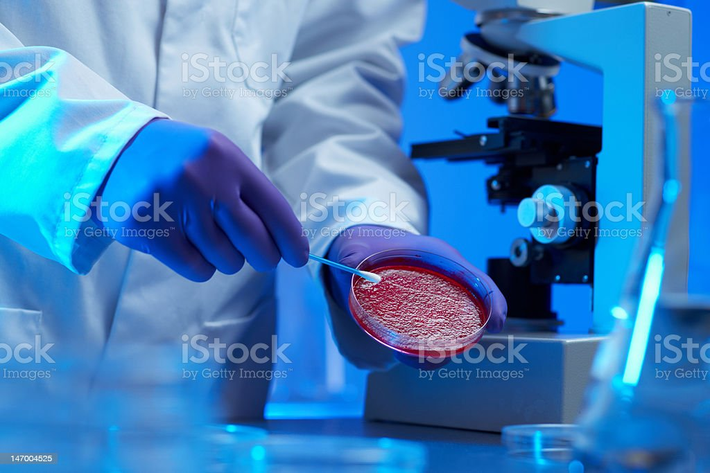 scientist examining culture sample stock photo