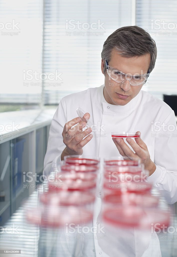 Scientist examining petri dishes in lab royalty-free stock photo