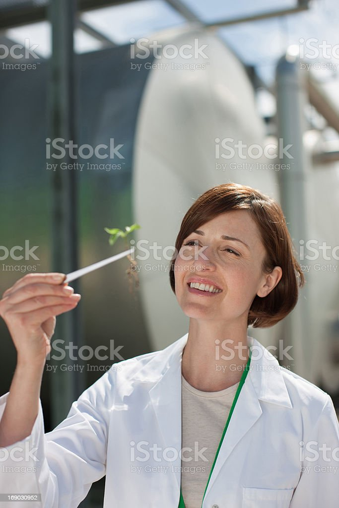 Scientist examining plant outdoors stock photo