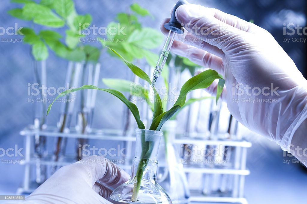 Scientist examining plants with gloves on royalty-free stock photo