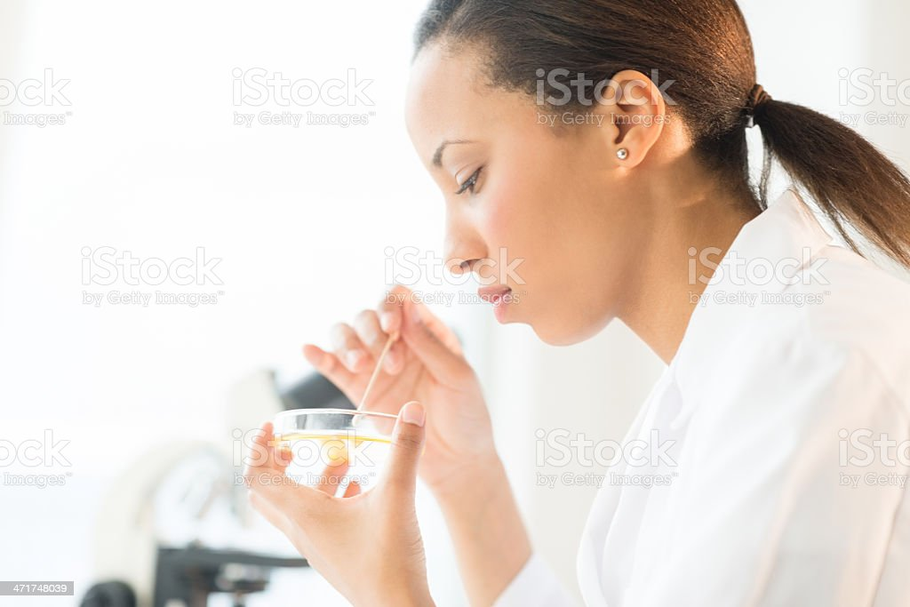 Scientist Examining Solution In Petri Dish At Laboratory royalty-free stock photo