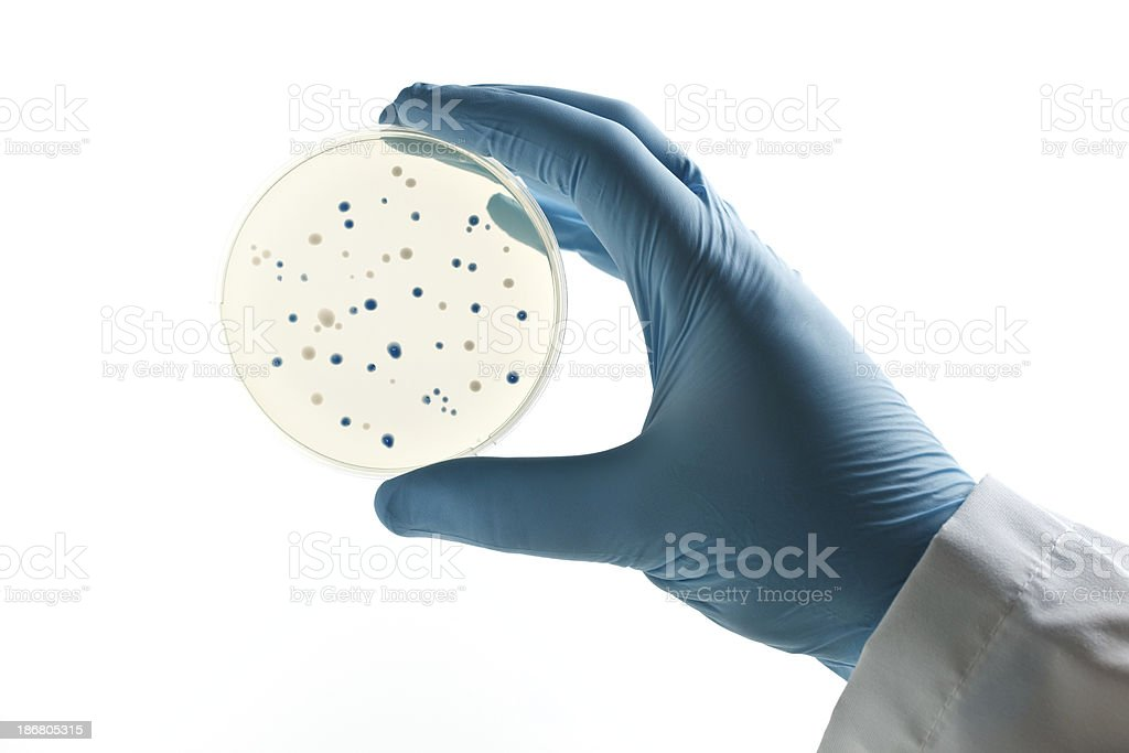 Scientist holding a Petri dish with bacterial clones royalty-free stock photo