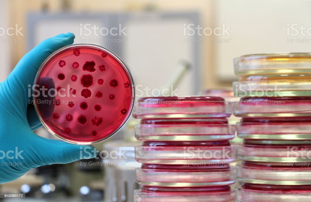 Scientist holding a red Petri dish on the laboratory background stock photo