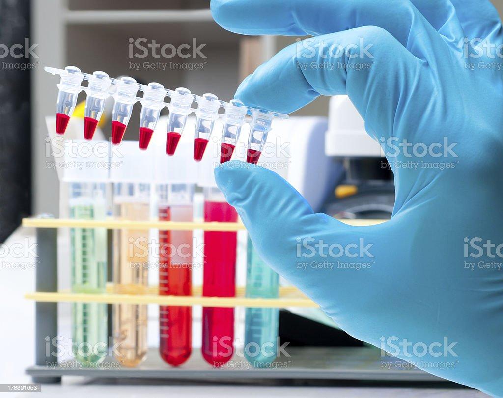 Scientist holds tube stripe for DNA analysis stock photo