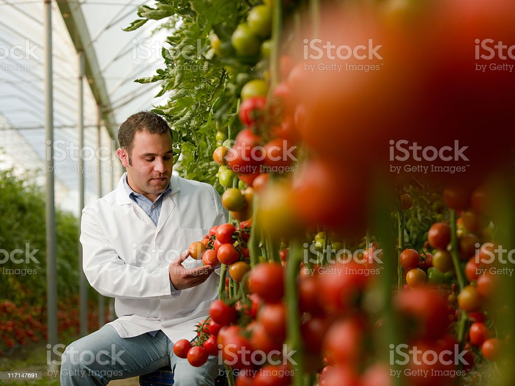 Scientist in greenhouse stock photo