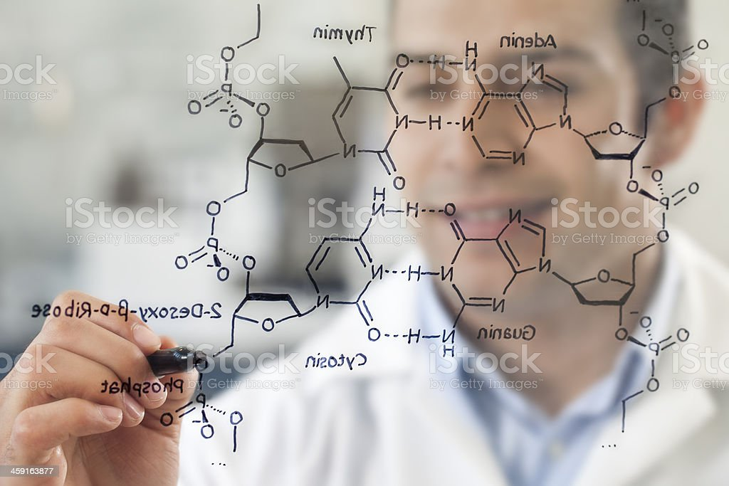 Scientist in Lab working on DNA Structure royalty-free stock photo