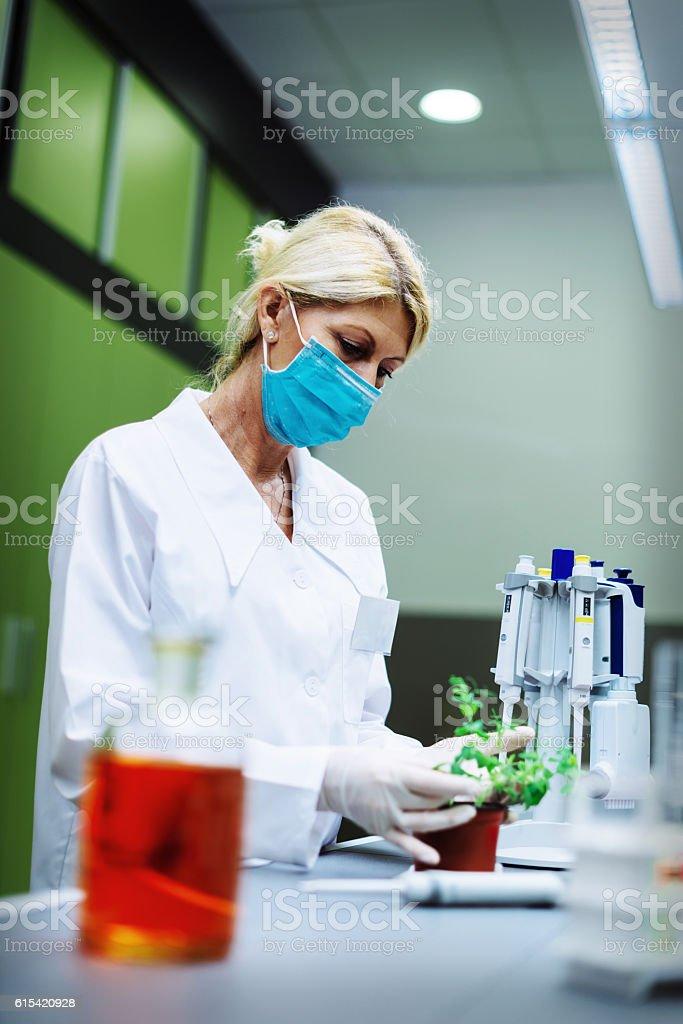 Scientist in laboratory examining plant stock photo
