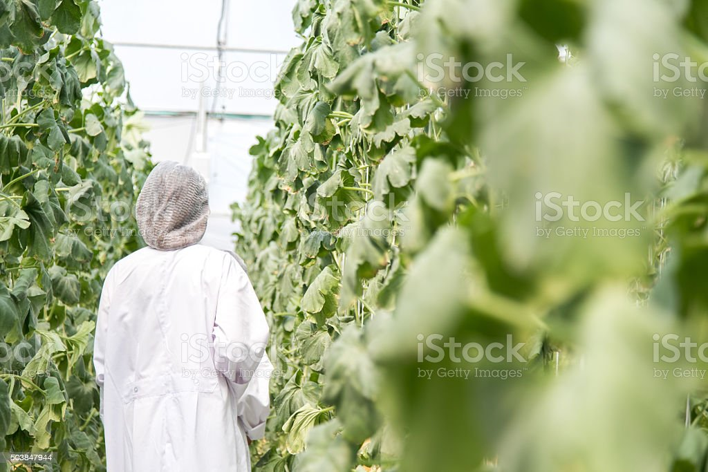 scientist in plant green house stock photo