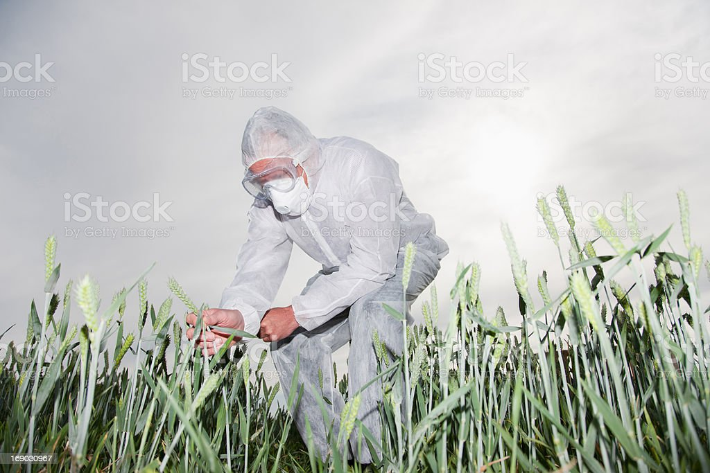 Scientist in protective gear examining plants stock photo