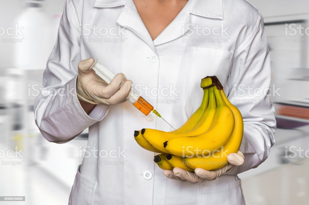 Scientist injecting liquid from syringe into bananas stock photo