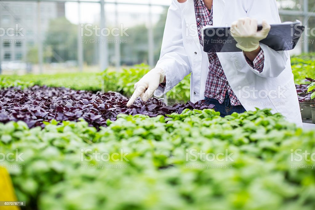 Scientist inspecting seedlings in garden center stock photo