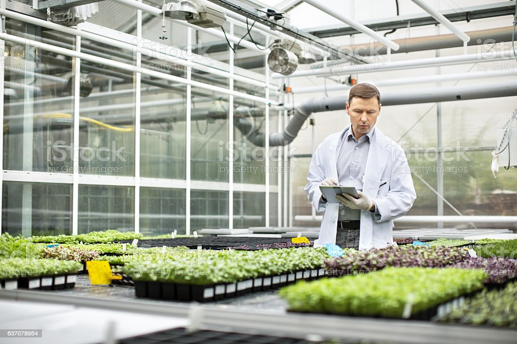 Scientist inspecting seedlings in greenhouse stock photo
