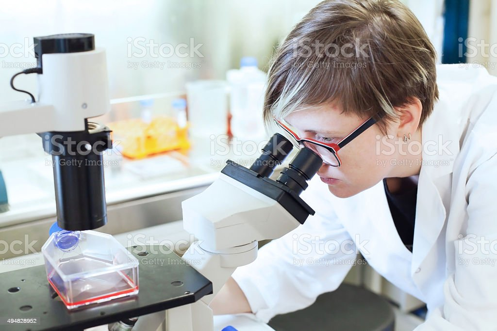 scientist looking at the microscope stock photo