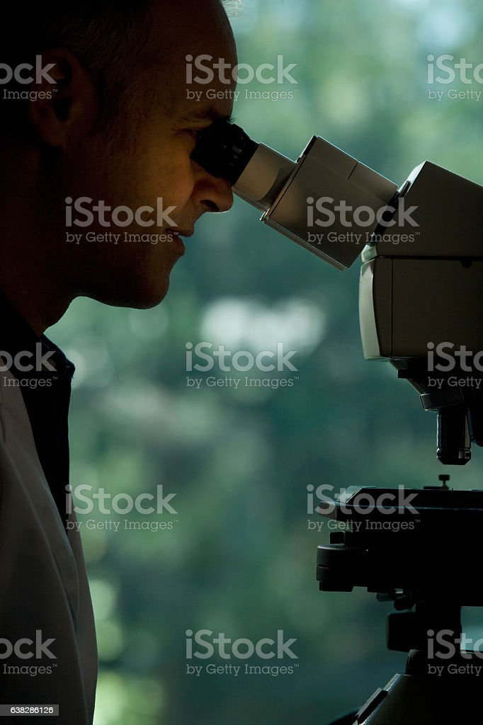 Scientist looking through microscope in laboratory stock photo