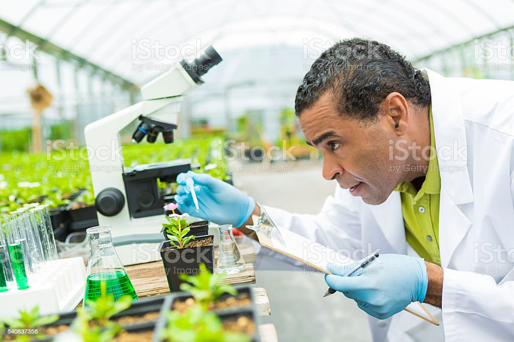 Scientist measuring the amount of liquid onto a plant stock photo