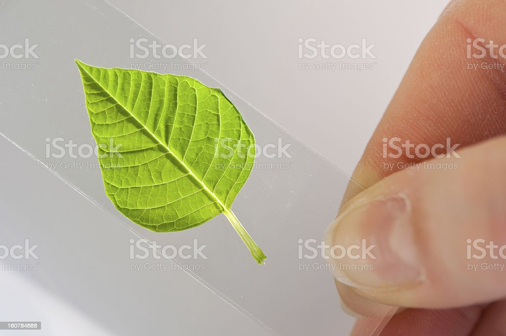 scientist observed green leaf in laboratory glass royalty-free stock photo