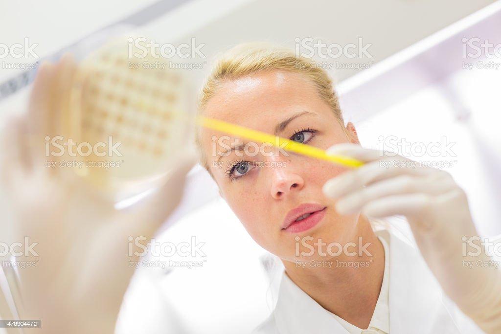Scientist observing petri dish. stock photo