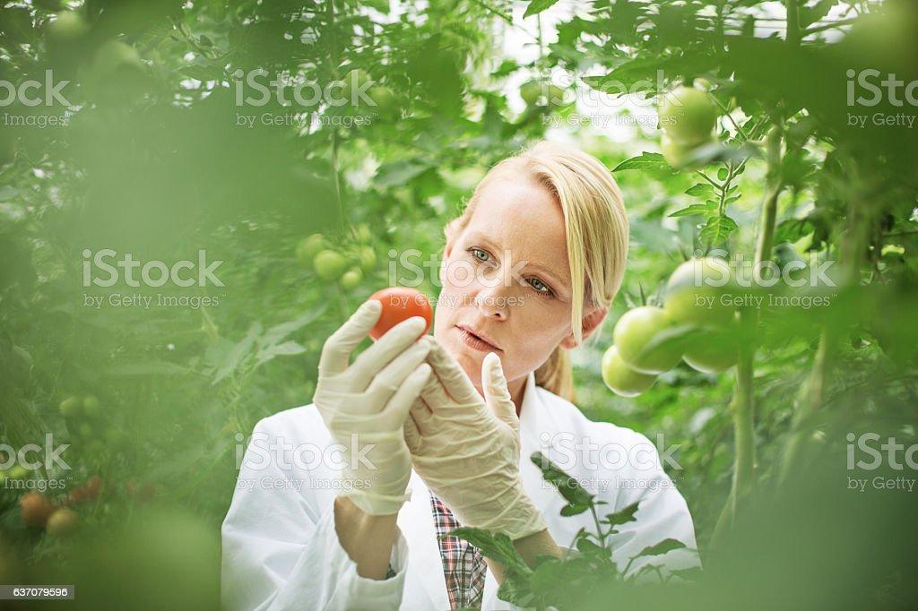 Scientist studying plant life stock photo