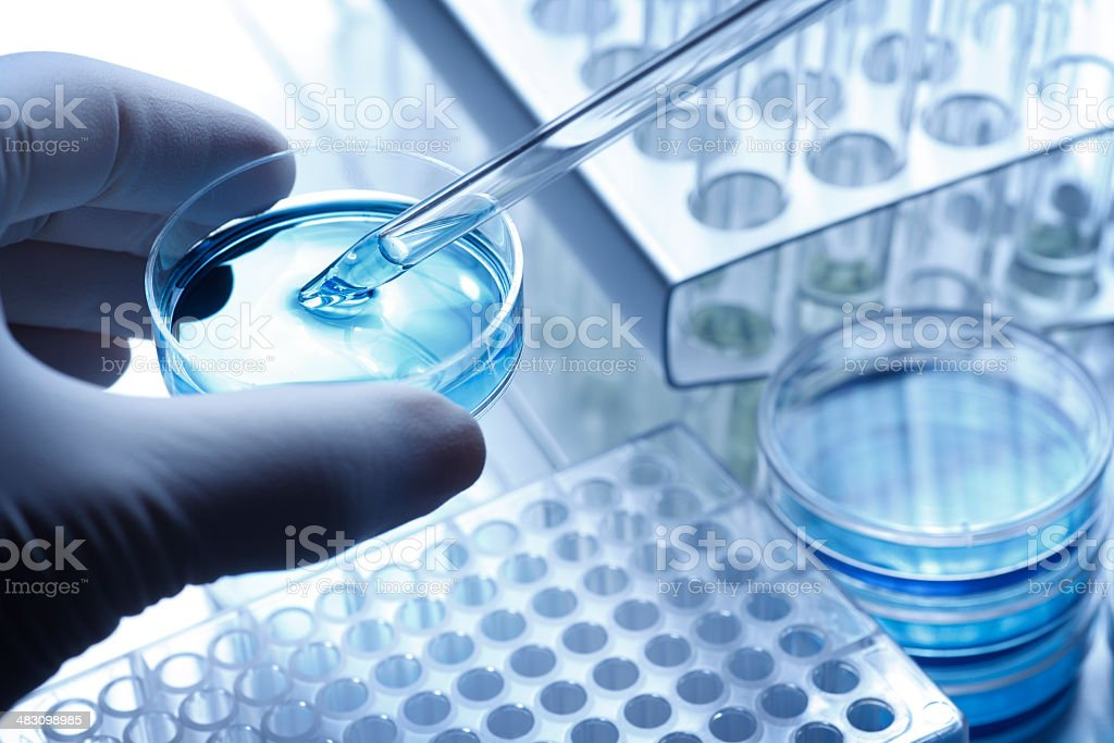 Scientist taking a sample out of a petri dish using a pipette stock photo