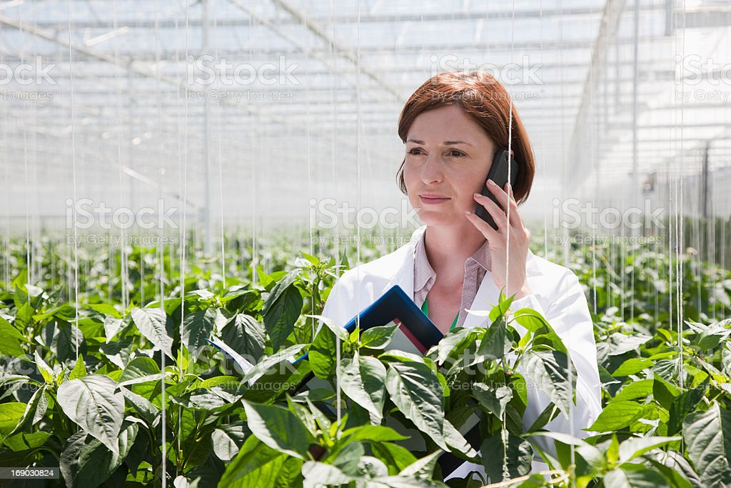 Scientist talking on cell phone in greenhouse royalty-free stock photo