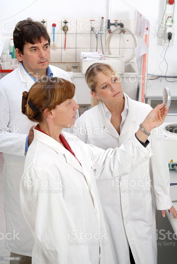 Scientist team royalty-free stock photo