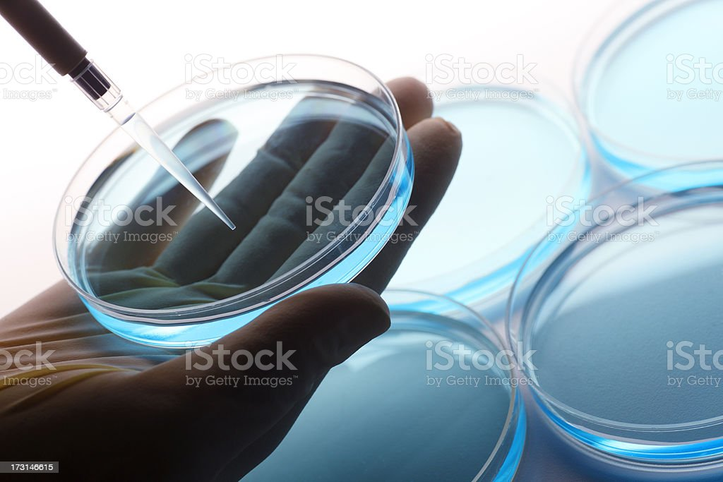 Scientist using pipette to extract liquid from petri dish stock photo