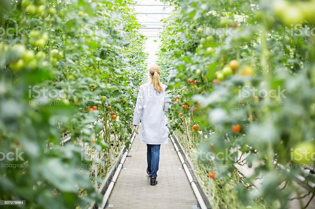 Scientist walking in greenhouse stock photo
