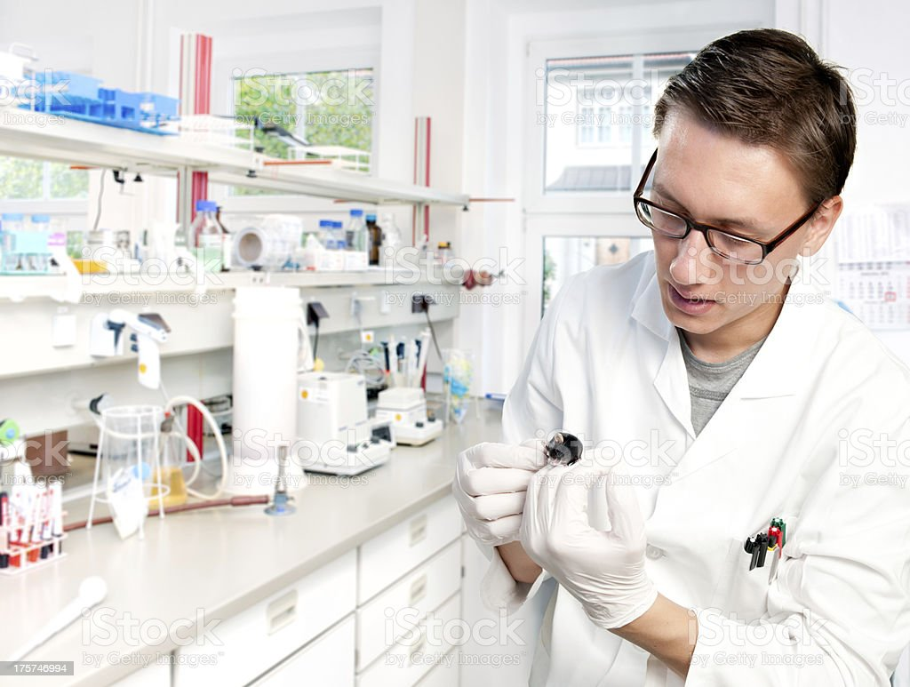 Scientist with a mouse stock photo