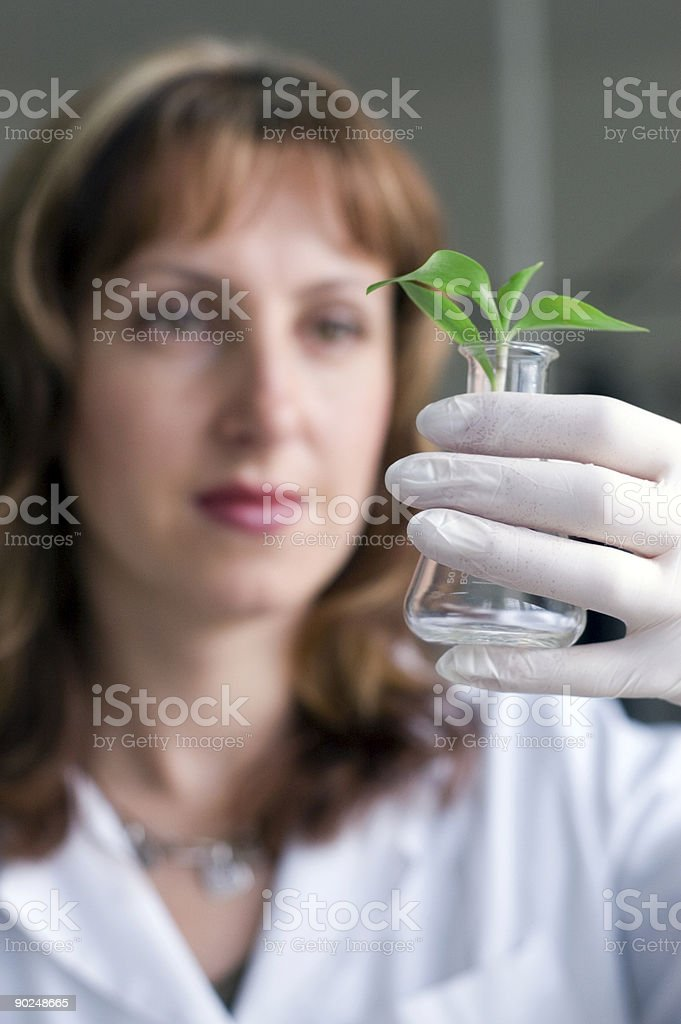 scientist with plant in test tube royalty-free stock photo