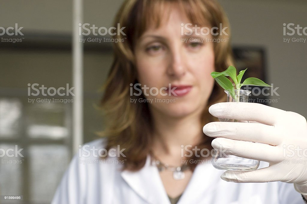 scientist with plant.see more biotechnology theme. royalty-free stock photo