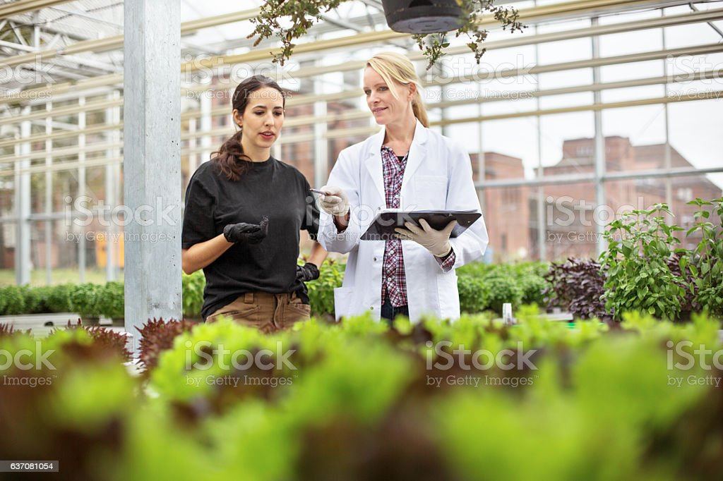 Scientist with worker examining plants in greenhouse stock photo