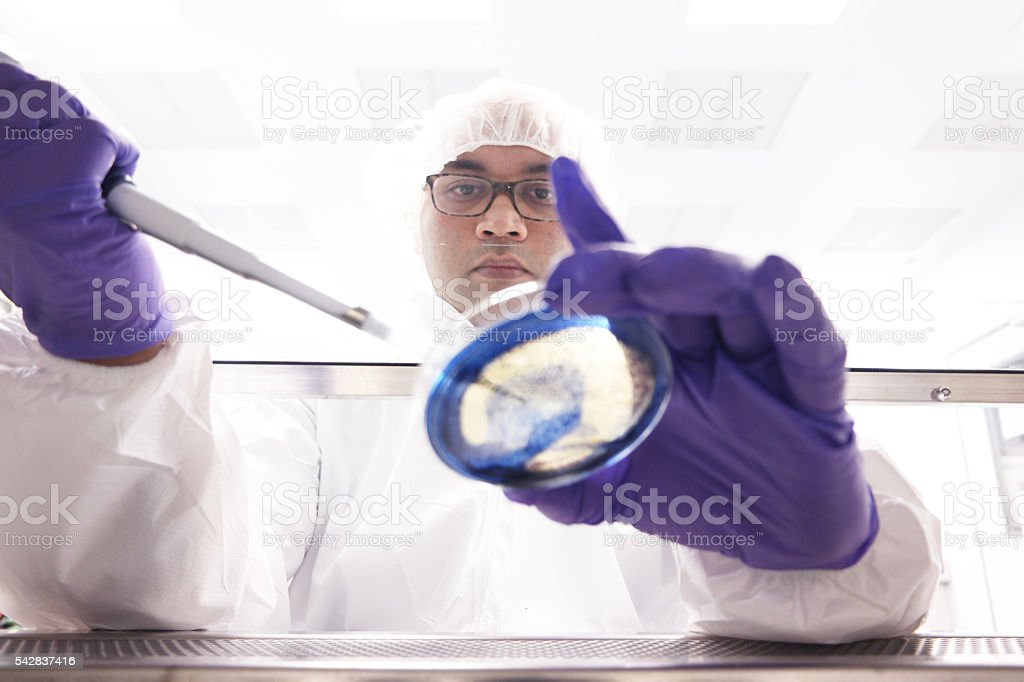 Scientist working in a biosafety cabinet stock photo