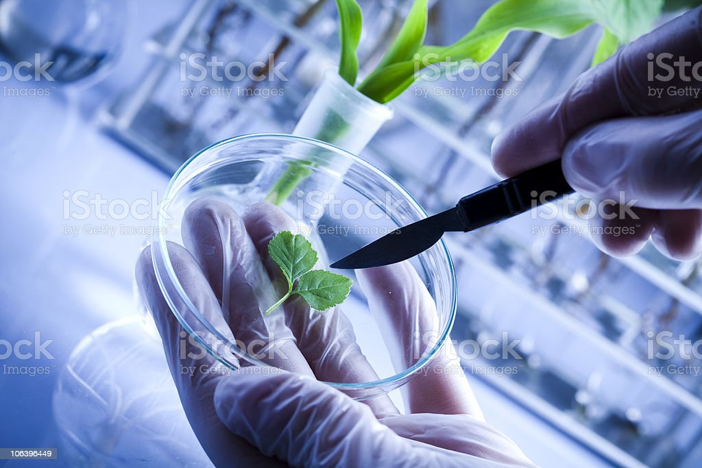 Scientist working in a laboratory and plants stock photo