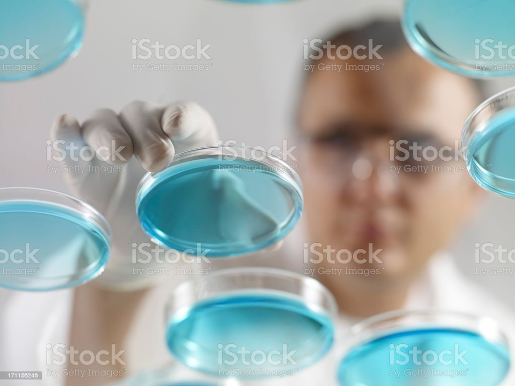 Scientist Working With Petri Dishes royalty-free stock photo
