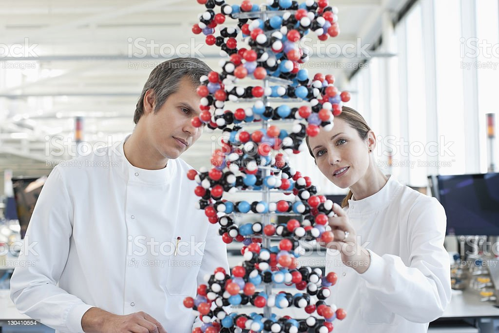 Scientists examining molecular model in lab royalty-free stock photo
