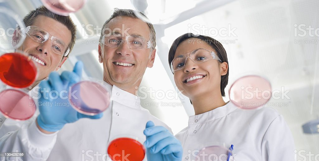 Scientists examining petri dishes in lab royalty-free stock photo