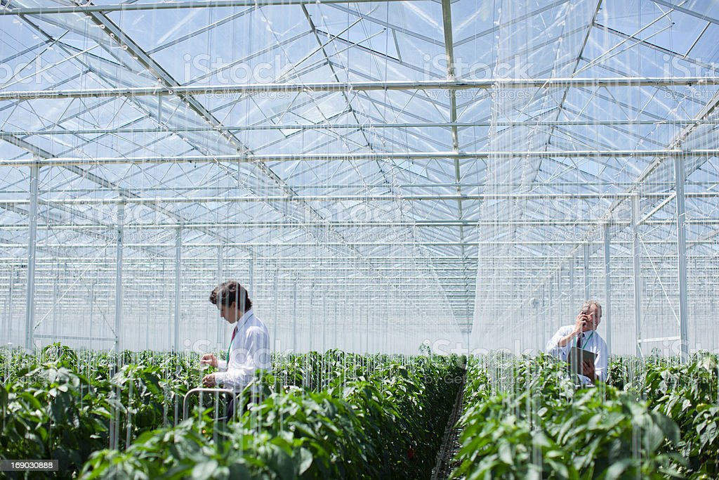 Scientists examining produce in greenhouse stock photo