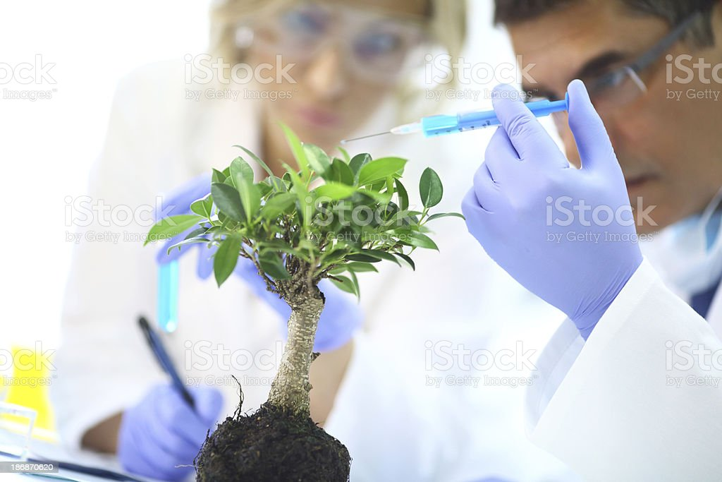 Scientists experimenting with a plant. royalty-free stock photo