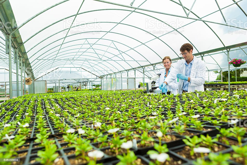 Scientists greenhouse laboratory stock photo