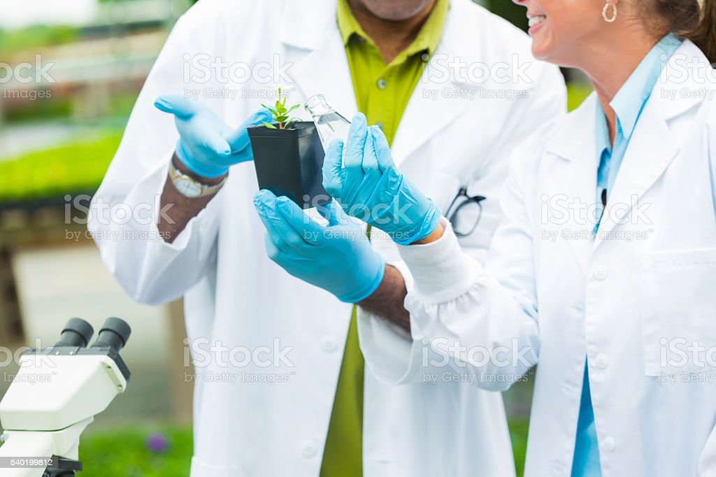 Scientists hands holding and discussing a plant stock photo