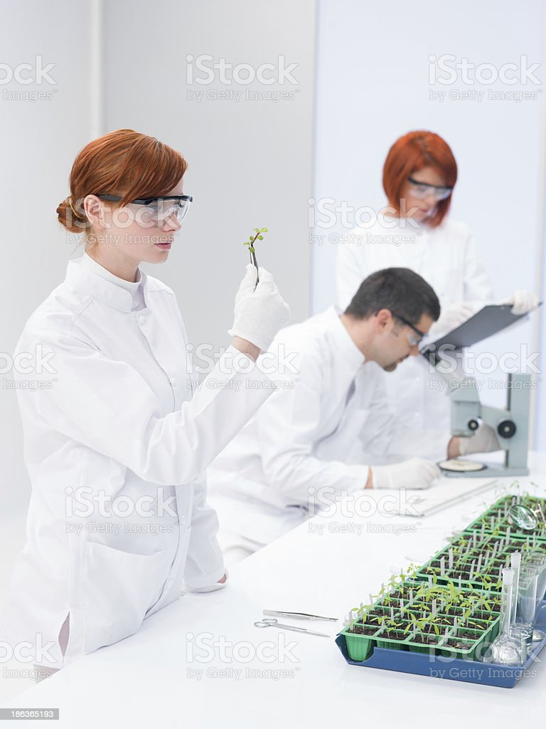 Scientists in a genetic engineering laboratory stock photo